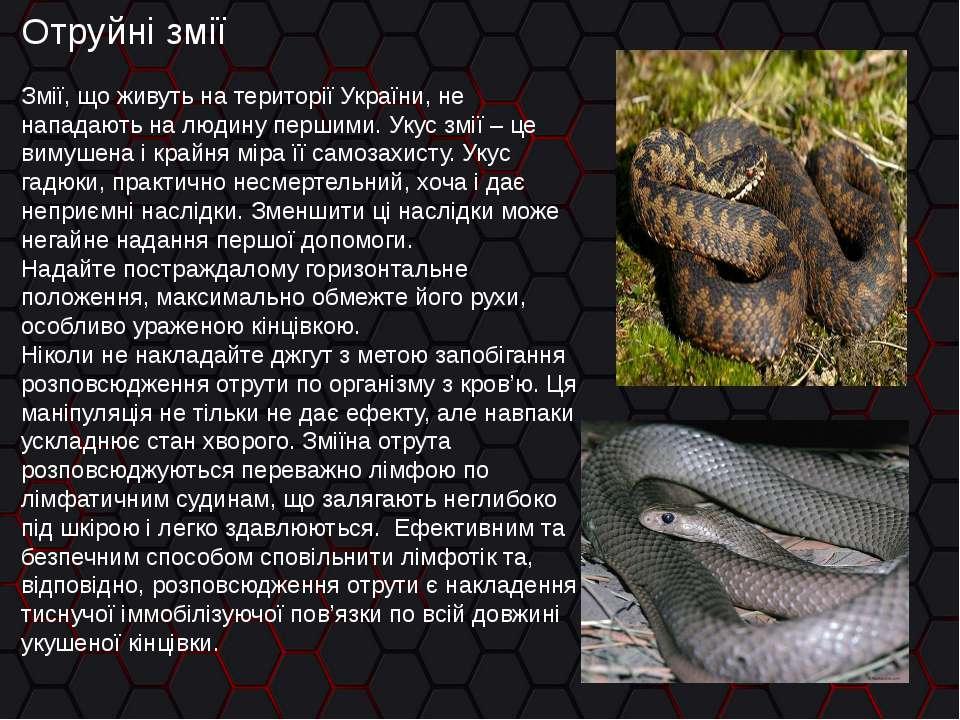 Отруйні змії Змії, що живуть на території України, не нападають на людину пер...