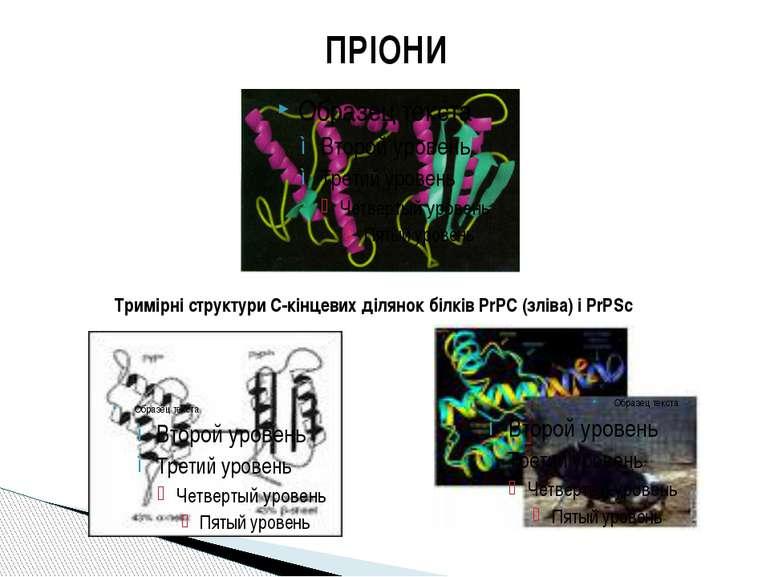 ПРІОНИ Тримірні структури С-кінцевих ділянок білків PrPC (зліва) і PrPSc