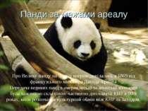 Панди за межами ареалу Про Велику панду на Заході вперше довідались в 1869 ві...