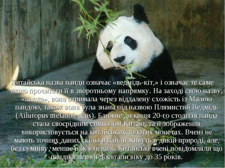 Китайська назва панди означає «ведмідь-кіт,» і означає те саме якщо прочитати...
