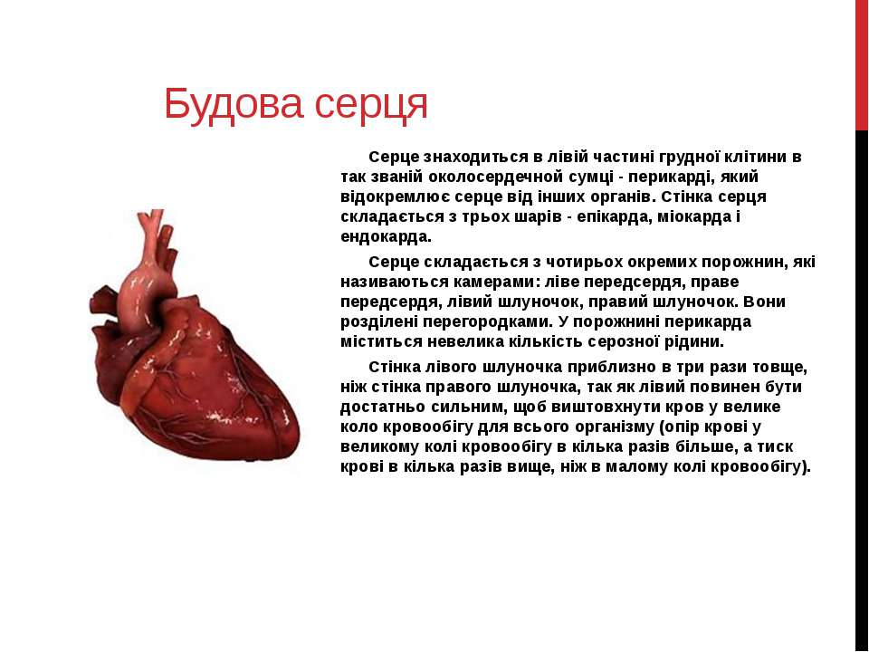 Будова серця Серце знаходиться в лівій частині грудної клітини в так званій о...