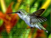 До цього загону належать дрібні птиці, величина яких вагається від джмеля до ...