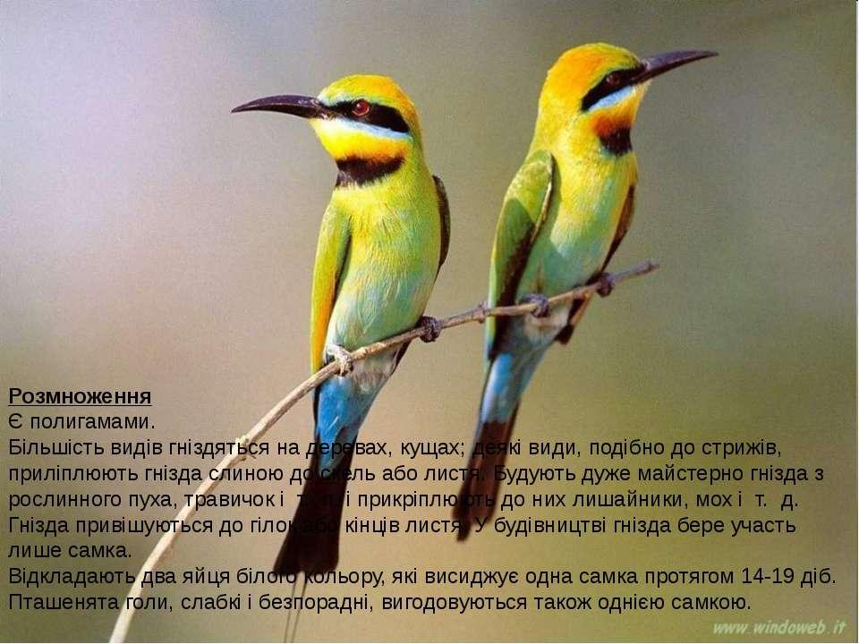 Розмноження Є полигамами. Більшість видів гніздяться на деревах, кущах; деякі...