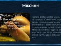 Міксини Багато особливостей міксин об'єднують їх з міногами. Обидві ці риби є...