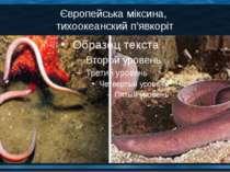 Європейська міксина, тихоокеанский п'явкоріт