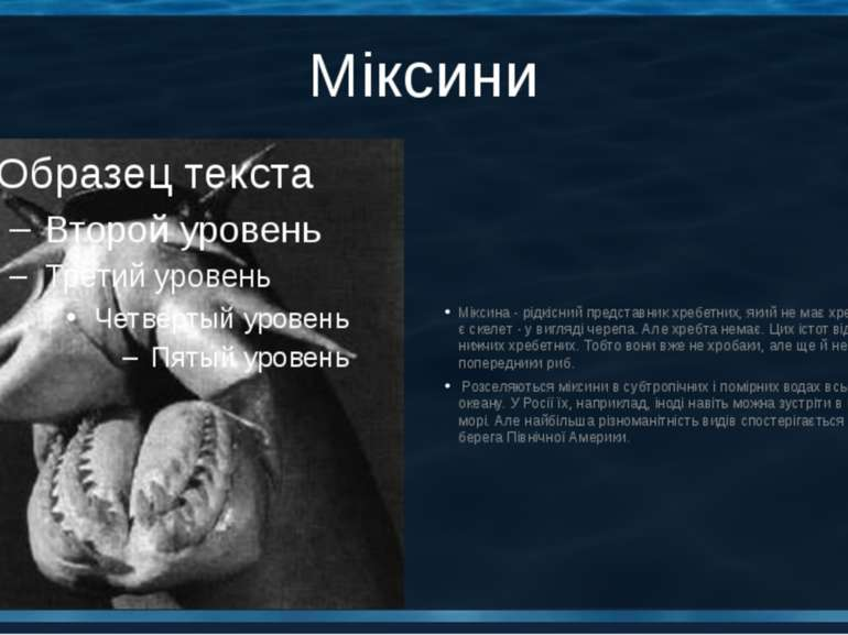 Міксини Міксина - рідкісний представник хребетних, який не має хребта. У мікс...