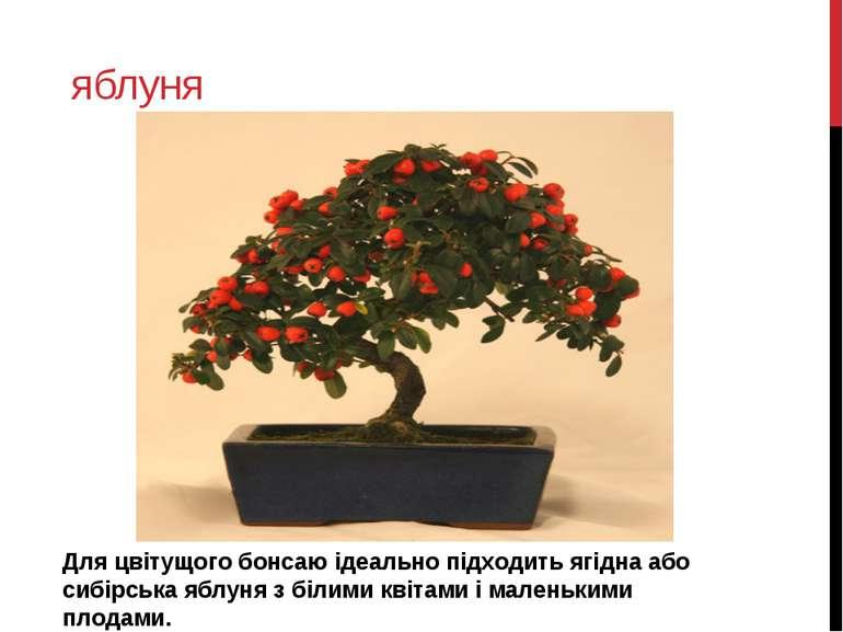 яблуня Для цвітущого бонсаю ідеально підходить ягідна або сибірська яблуня з ...