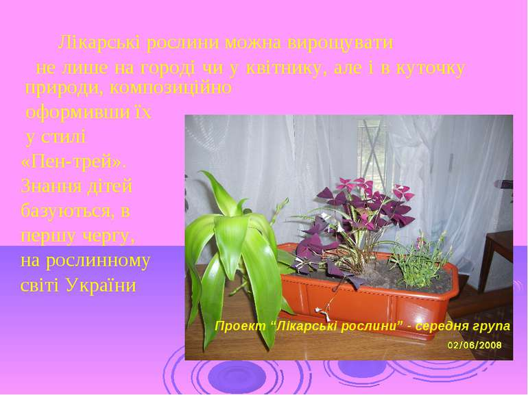 Лікарські рослини можна вирощувати не лише на городі чи у квітнику, але і в к...