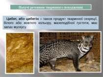 Цибет, або цибетін – також продукт тваринної секреції, білого або жовтого кол...