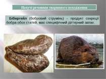 Бібергейл (бобровий струмінь) – продукт секреції бобра обох статей, має специ...