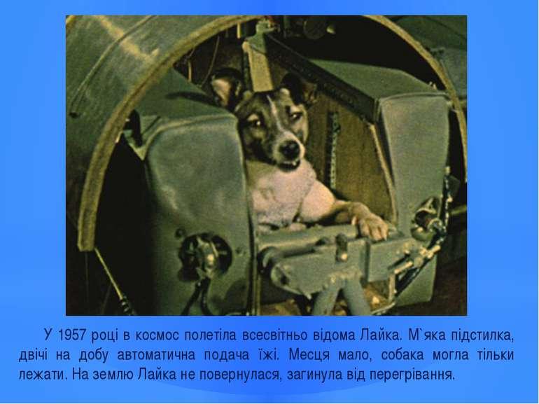У 1957 році в космос полетіла всесвітньо відома Лайка. М`яка підстилка, двічі...
