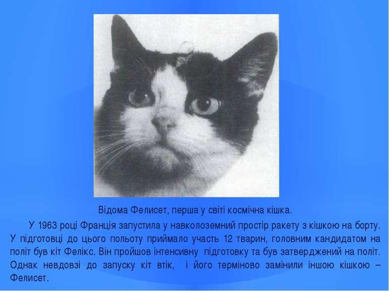 Відома Фелисет, перша у світі космічна кішка. У 1963 році Франція запустила у...