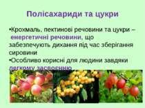 Полісахариди та цукри Крохмаль, пектинові речовини та цукри – енергетичні реч...