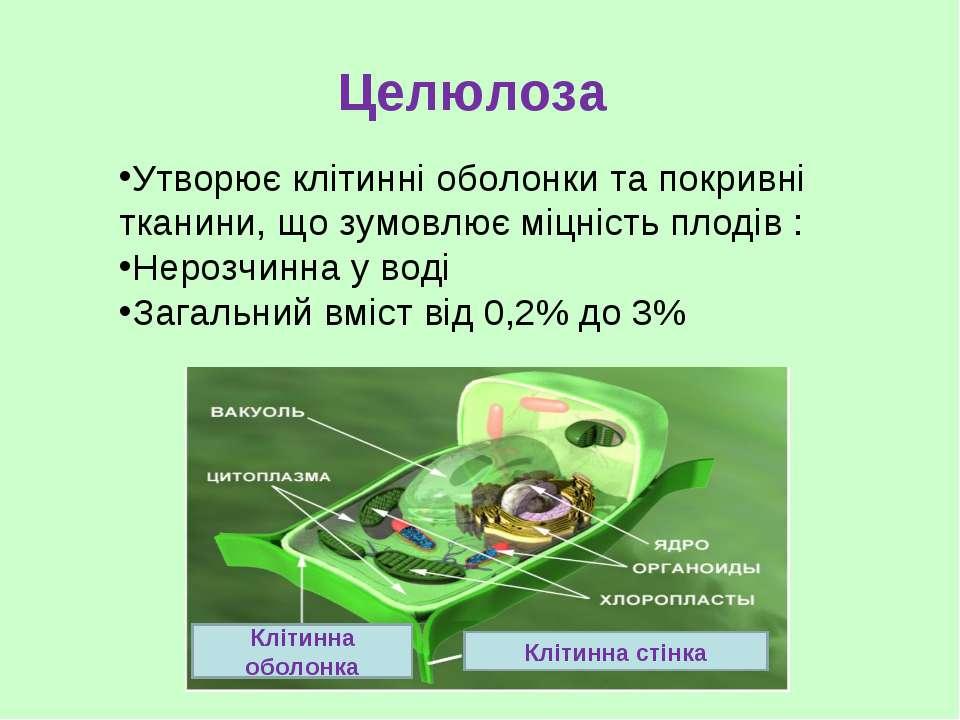 Целюлоза Утворює клітинні оболонки та покривні тканини, що зумовлює міцність ...