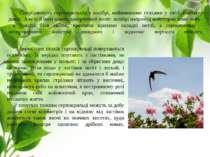 Спорідненість серпокрильців з колібрі, найменшими птахами у світі, спочатку д...