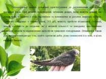 Серпокрильці мають унікальні пристосування до переживання критичних погодних ...