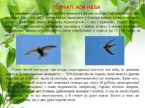 ПЕРНАТІ АСИ НЕБА Це дивовижні птахи. Орнітологи їх називають дітьми повітря. ...