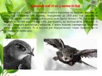 Дивовижний птах у великій біді Цікаво, але в Європі серпокрильці селяться пер...