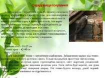 Середовище існування Серпокрилець – перелітний птах. На початку гніздового пе...