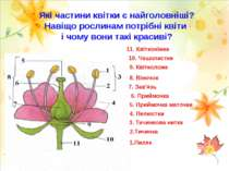 Які частини квітки є найголовніші? Навіщо рослинам потрібні квіти і чому вони...