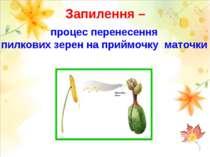 Запилення – процес перенесення пилкових зерен на приймочку маточки