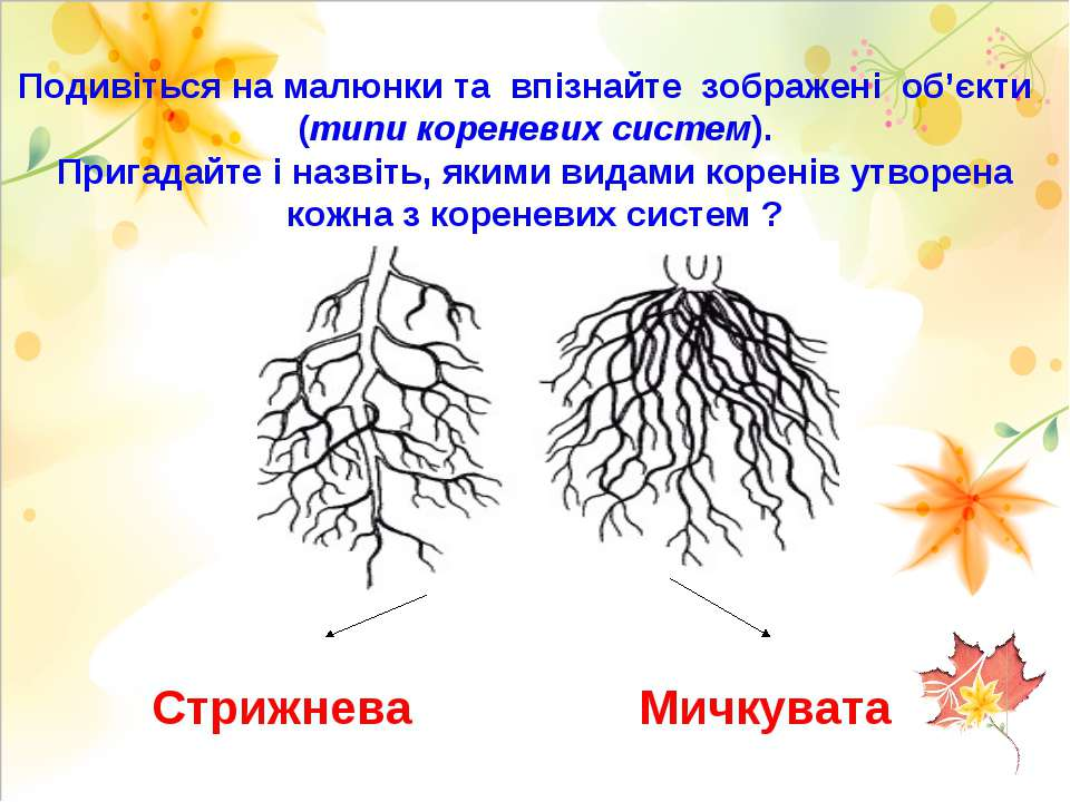 Подивіться на малюнки та впізнайте зображені об'єкти (типи кореневих систем)....