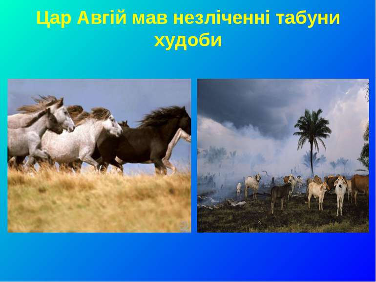 Цар Авгій мав незліченні табуни худоби