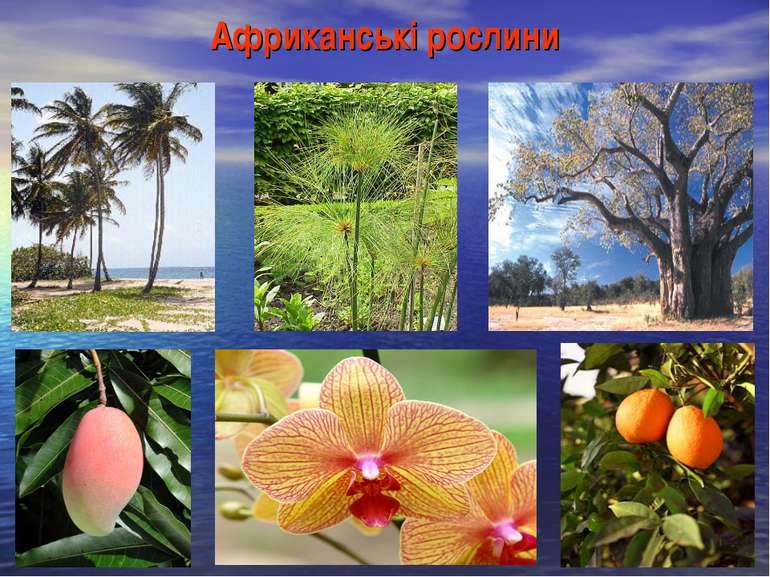 Африканські рослини