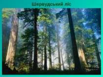 Шервудський ліс