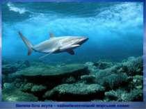 Велика біла акула – найнебезпечніший морський хижак