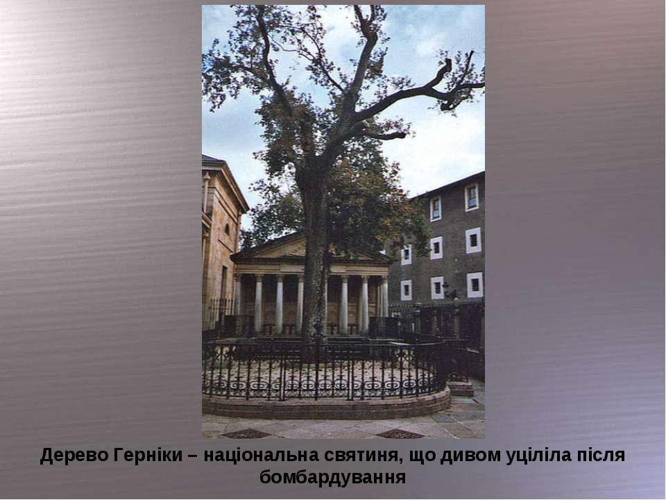 Дерево Герніки – національна святиня, що дивом уціліла після бомбардування