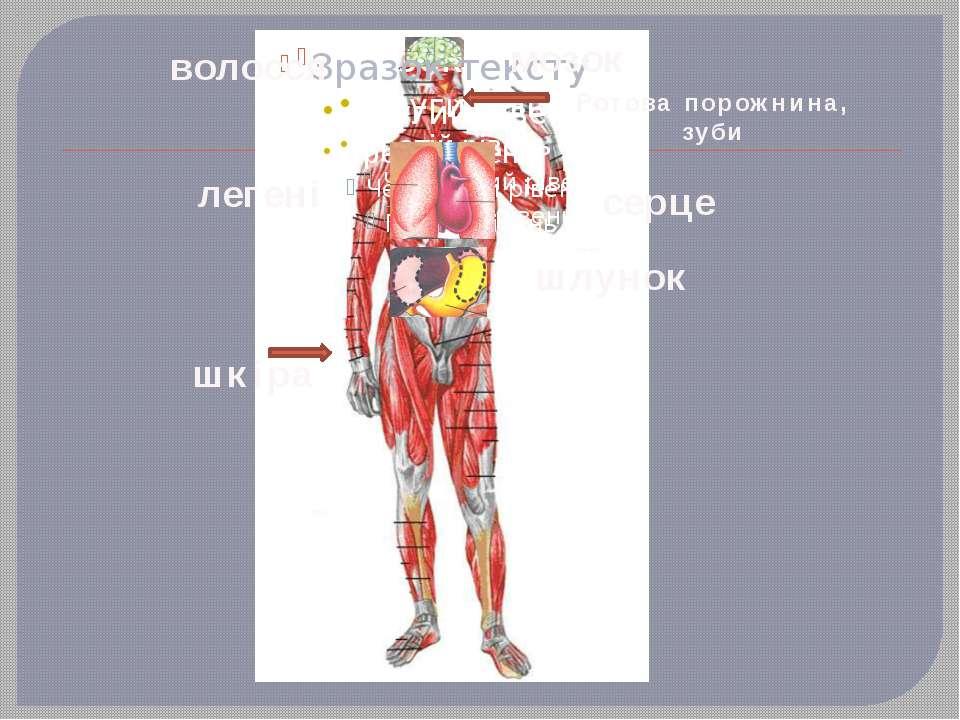 легені мозок шлунок Ротова порожнина, зуби шкіра волосся серце