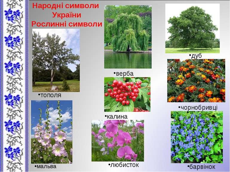 Народні символи України Рослинні символи верба дуб тополя калина чорнобривці ...