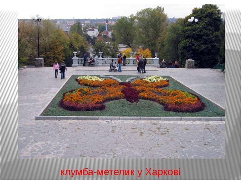 клумба-метелик у Харкові