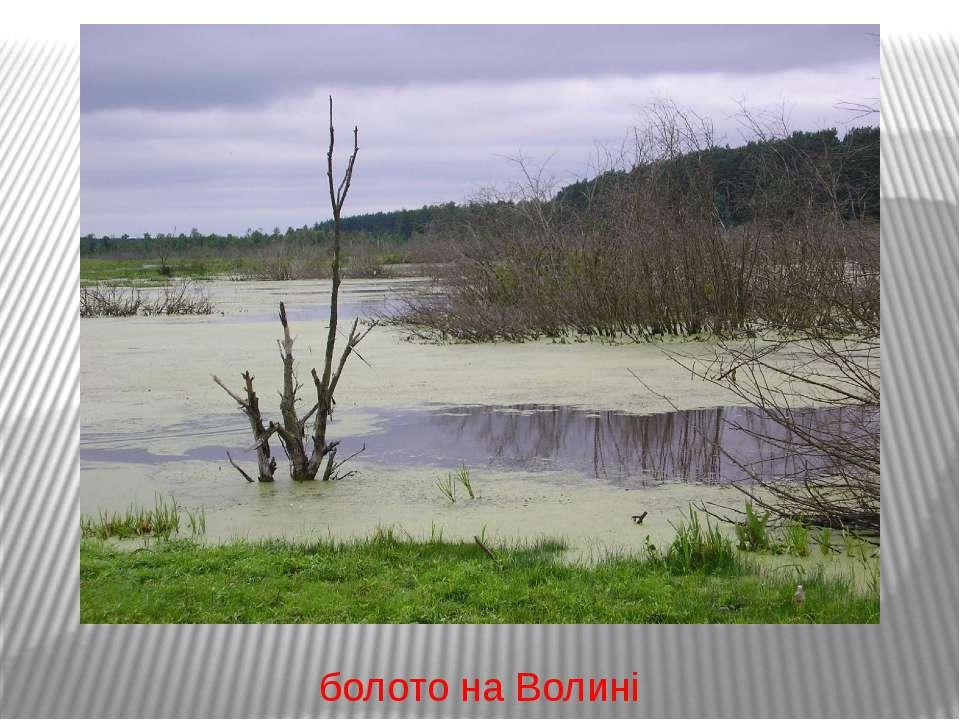 болото на Волині