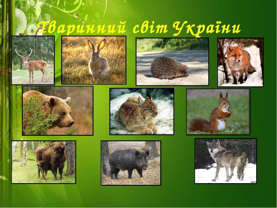 Тваринний світ України