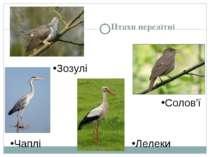 Птахи перелітні Зозулі Чаплі Лелеки Солов'ї