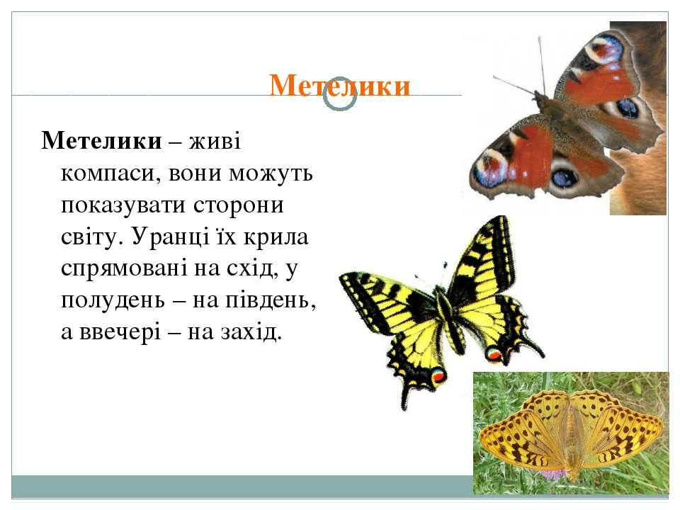 Метелики Метелики – живі компаси, вони можуть показувати сторони світу. Уранц...