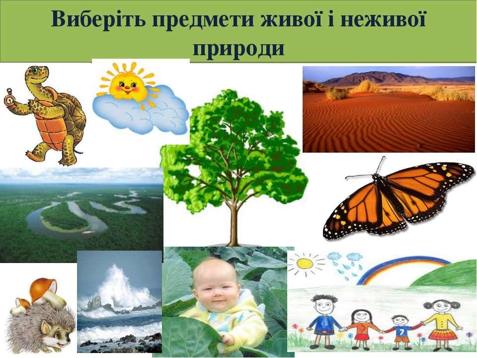 Виберіть предмети живої і неживої природи