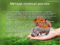 Методи селекції рослин У рослинництві використовується віддалена гібридизація...