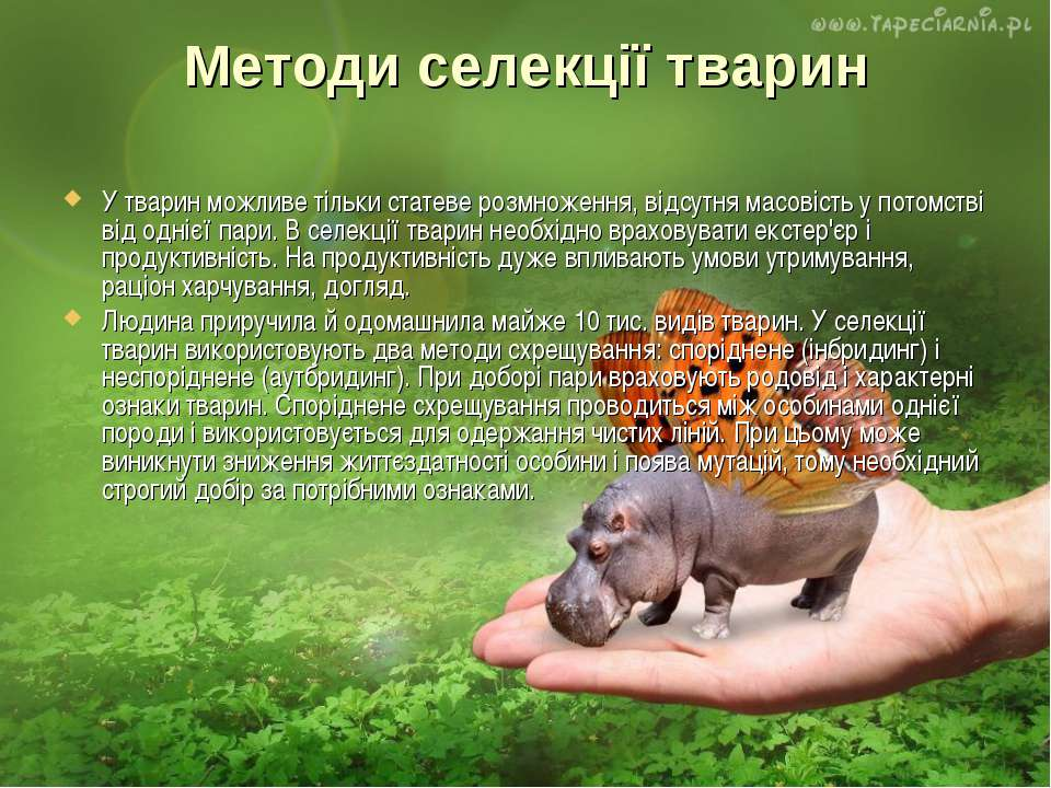 Методи селекції тварин У тварин можливе тільки статеве розмноження, відсутня ...