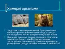 Химерні організми За допомогою химерних мишей було розв'язане питання про спо...