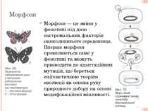 Морфози Морфози — це зміни у фенотипі під дією екстремальних факторів навколи...