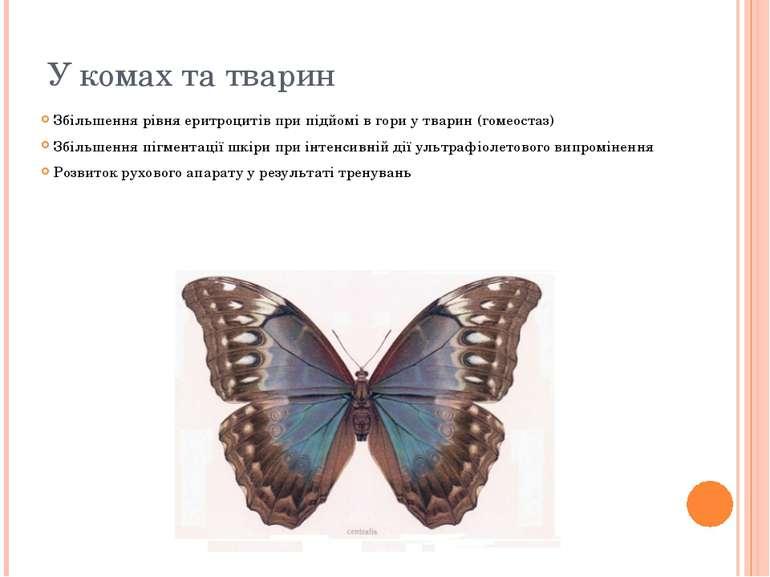 У комах та тварин Збільшення рівня еритроцитів при підйомі в гори у тварин (г...