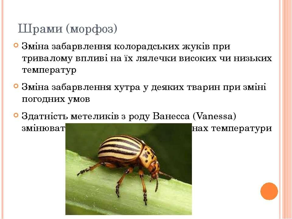Шрами (морфоз) Зміна забарвлення колорадських жуків при тривалому впливі на ї...