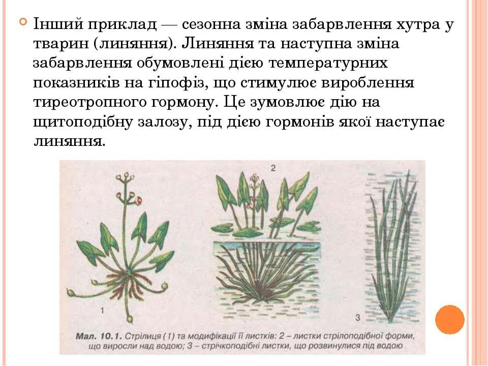 Інший приклад — сезонна зміна забарвлення хутра у тварин (линяння). Линяння т...