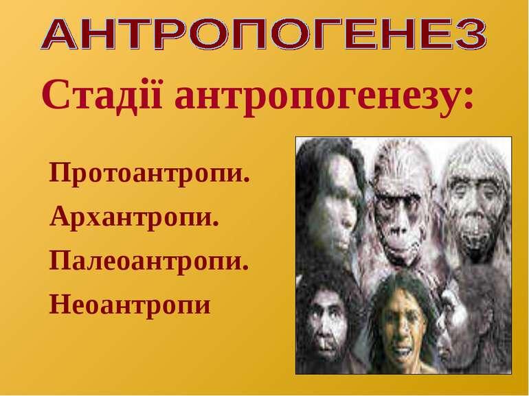 Стадії антропогенезу: Протоантропи. Архантропи. Палеоантропи. Неоантропи