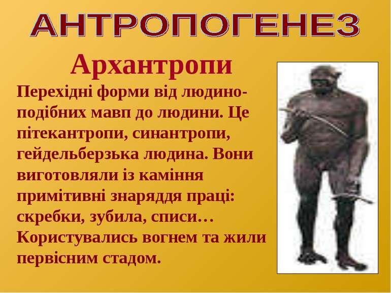 Архантропи Перехідні форми від людино- подібних мавп до людини. Це пітекантро...