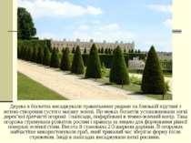 Дерева в боскетах висаджували правильними рядами на близькій відстані з метою...