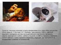 Сучасна тканинна інженерія почала оформлюватися в самостійну дисципліну після...